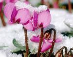 комнатные растения цветущие зимой фото
