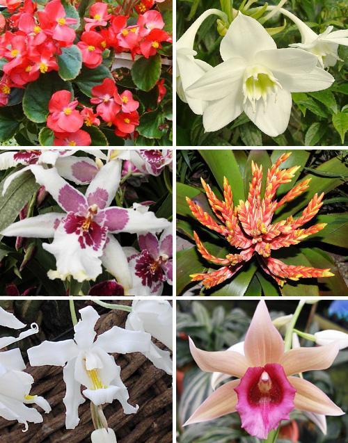 растения которые цветут зимой фото