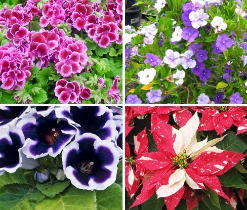 растения цветущие зимой фото