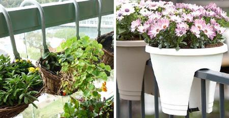 Цветы для балкона.