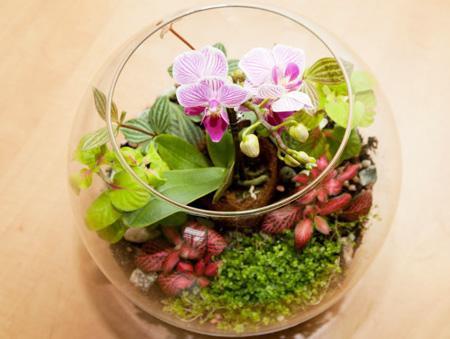 Растения для флорариума