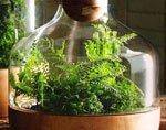 зелень в стекле