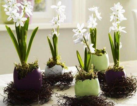 Цветы как вырастить