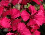 Календарь цветения многолетников фото