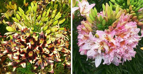 Женские домашние цветы фото и названия уход
