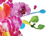 taiwan international orchid show 2014