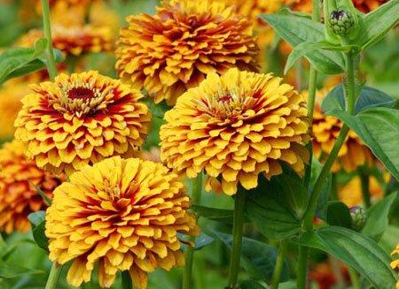 как сажать цветы семенами