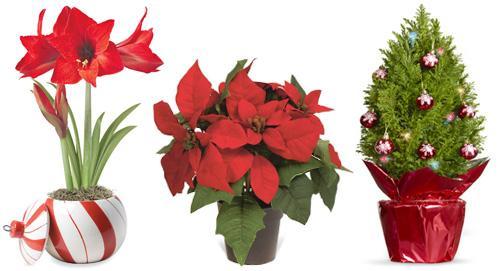 Букет цена, цветы которые можно подарить зимой