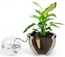 автоматический полив комнатных растений фото