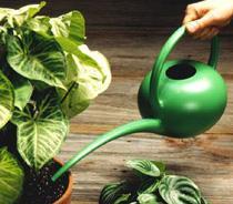 полив комнатных растений под корень фото