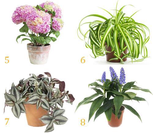 комнатные растения для северных окон фото