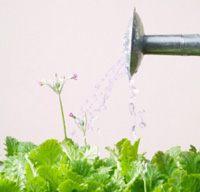вода для полива растений фото