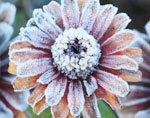 морозостойкость растений
